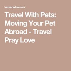 Travel With Pets: Moving Your Pet Abroad - Travel Pray Love