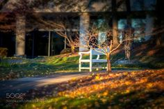 Presidential Library Bench http://ift.tt/21gGzoB autumnwarmgardenamericasun lightUSAAtlantaMuseumAmerikaPresidential LibraryOrestor 2.8 100mmhttp://ift.tt/1TWHIgw Carter Library and MuseumJimmy CarterDr. Thomas UttichAmerica Presidential Library