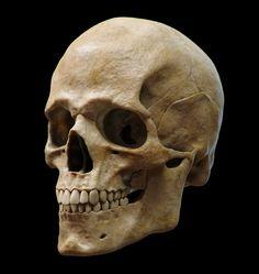Anatomy Study (Skull), Guzz Soares on ArtStation at https://artstation.com/artwork/anatomy-study-skull