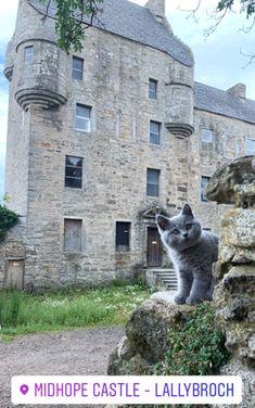 35 Adso The Cat From Outlander Aka Bear Ideas Outlander Kitten The Fiery Cross