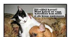 Olen lihonut ja.... - HAUSK.in Cats, Animals, Gatos, Animales, Animaux, Animal, Cat, Animais, Kitty