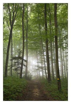 Hiking into the fog, Pratteln, Basel Land, Switzerland Copyright: Adrian Studer