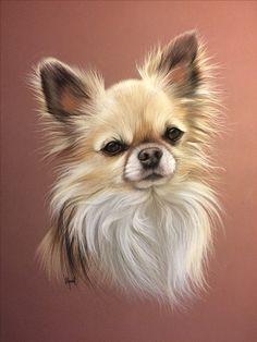 Chihuahua au pastel
