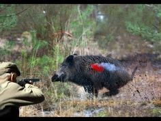 Chasse Au Sanglier HD,Hunting Boar,Kill 6 Boar In One Row