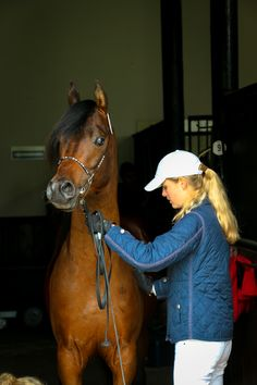 Arabian stallion - Shivaji JJ (Ajman Moniscione x Sasha Jullyen V / Jullyen El Jamaal). Varian bloodlines in Europe.