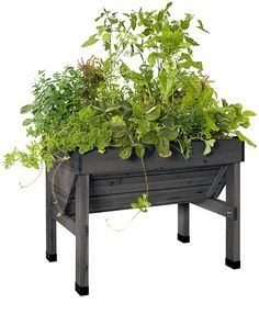 Compact VegTrug Patio Garden in Charcoal | Convenient Elevated Raised Bed
