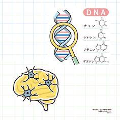肥満遺伝子・生活習慣・認知症についてわかりやすく伝える指導箋です。