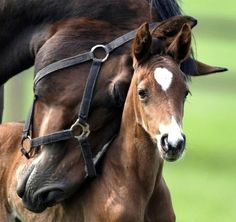 mother and her sweet bay foal