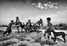 Pampa Gaúcho   Fotografia de Tadeu Vilani  