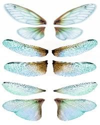 OOAK Artist Emporium - Fairy Wing Prints, many wonderful choices for wings!