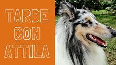 Tarde con Attila / MARIA DOVAL BALLET