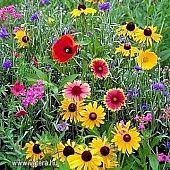 Hancock Farm & Seed Company - Lawn, Pasture and Turf Grass Seed Champs, Seeds Online, Seeds For Sale, Wildflower Seeds, Grass Seed, Delphinium, Flower Pots, Wild Flowers, Spring Flowers
