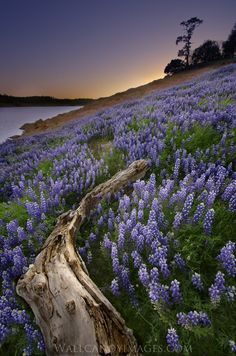 Purple Maze by Dustin Penman, via 500px