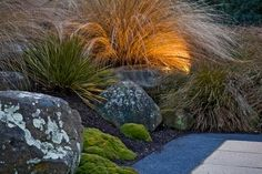 Landscape garden - native New Zealand design