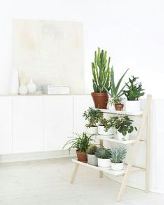 Decorate the black bookshelf with small plants. Matching containers