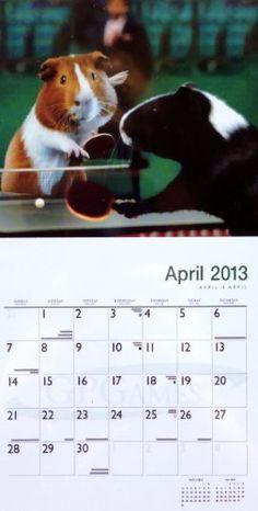 Guinea Pig Games Wall Calendar 2013