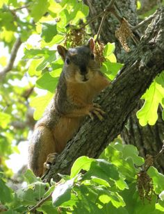 Oklahoma wild squirrel. Well not to wild to pose for a picture.