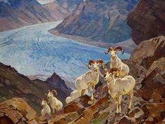 "Carl Rungius, ""Dall Sheep"", c. Wildlife Paintings, Wildlife Art, Nature Hunt, Hunting Art, Sports Art, Western Art, Pet Birds, Animals Beautiful, Biology"