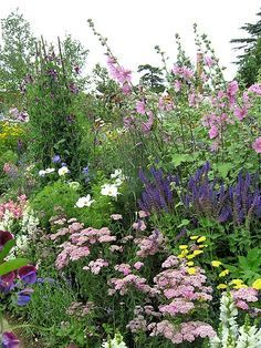 Bauerngarten Sommerblumen Bauerngarten Sommerblumen Ein Blumenbeet im Bauerngarten-Stil mit Steppensalbei, Schmuckkörbchen, Schafgarbe, Stockrose, Buschmalve