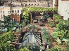 Not your average rooftop. NYC Chef Richard Farnabe's Rooftop Farm to Table. I want one!