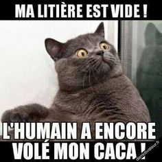 Notre seule ambition ? Vous décrocher un sourire ! The litter box is empty The human stole my poop again