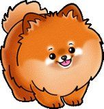 Marvelous Pomeranian Does Your Dog Measure Up and Does It Matter Characteristics. All About Pomeranian Does Your Dog Measure Up and Does It Matter Characteristics. Cute Animal Drawings, Kawaii Drawings, Cute Drawings, Cute Dog Drawing, Cute Cartoon Animals, Baby Animals, Cute Animals, Lap Dogs, Cute Dogs