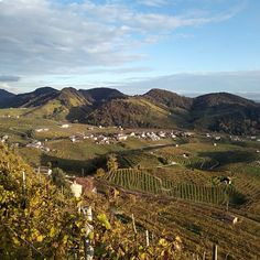 A view on area in the docg wine region (Treviso). Prosecco, Tours, Italy, Wine, Outdoor, Outdoors, Italia, Outdoor Living, Garden