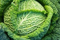 Cabbage is an anti-inflammatory and detoxifying food. The many healing benefits of cabbage juice include detoxifying the liver, soothing inflammation, healing wounds and peptic ulcers . Cabbage Benefits, Low Calorie Vegetables, Veggies, Cabbage Juice, Savoy Cabbage, Juicing For Health, Health Foods, Garden Pictures, Fruit And Veg