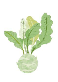 NANNA_Illustration_kohlrabi # ilustração - New Site Vegetable Illustration, Plant Illustration, Graphic Design Illustration, Botanical Illustration, Graphic Art, Tinta China, Botanical Wall Art, Planting Vegetables, Food Drawing