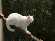 cat ladder - Google Search
