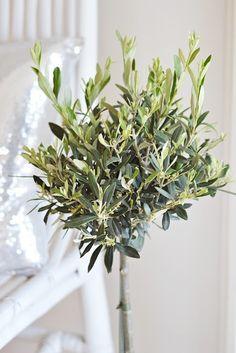 Love an olive tree. Moon Garden, Side Garden, Olives, Olive Gardens, Olive Tree, Aquaponics, Indoor Plants, Potted Plants, Garden Styles