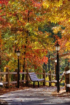SEASONAL – AUTUMN – a scenic pathway surrounded by the brilliant colors of fall.