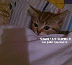 Russian Cat, Russian Memes, Sweet Memes, Spongebob Memes, Funny Video Memes, Life Memes, Funny Wallpapers, Stupid Memes, Animal Memes