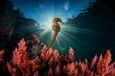 Best of Nature Photography Competition Winners Announced