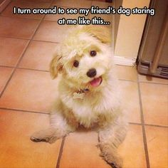 Funny Animal Pictures posted every day ! Funny Animal site brings daily updates of funny dogs and cats, pics and videos. Only the best Funny Animals. Cute Funny Animals, Funny Cute, Funny Dogs, Hilarious, Cute Puppies, Cute Dogs, Dogs And Puppies, Doggies, Corgi Puppies