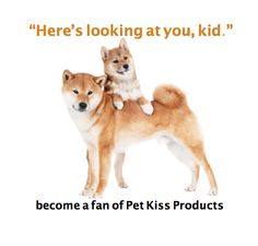 So adorable!  Visit our website at: www.petkiss.com