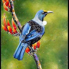 Lenna's Tui by Jo Logan Logan, Branding, Birds, Wall Art, Drawings, Painting, Animals, China, Tattoos