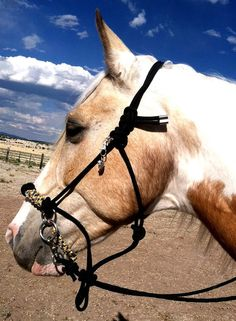 Paracord Bitless Bridle CHIN SLIP Rainbow by SimpleLoops on Etsy, $55.00