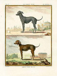 Chien Turc Metis, Buffon Histoire Naturelle Dog Prints 1766