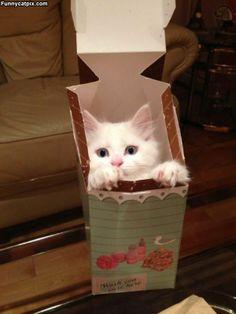 One Box Of Kitten
