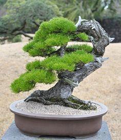 http://bonsaibark.com/wp-content/uploads/stone3.jpg