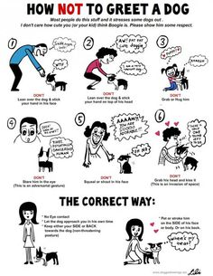 EVERYONE should follow this and teach their kids to do the exact same. I guarantee you'd see less anxious dogs out there leading to less bites. 90% of dog bites are because of how the person acted first.