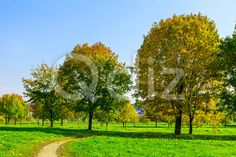 Qdiz Stock Photos | Autumn Landscape with Pathway and Trees,  #autumn #background #beautiful #beauty #blue #branch #cloud #colorful #day #environment #field #foliage #grass #green #idyllic #land #landscape #lawn #leaf #leaves #meadow #multicolored #nature #nobody #outdoors #park #path #pathway #plant #scenery #scenic #season #sky #sunlight #sunny #tranquil #tree #view #way #weather #wood #yellow