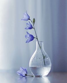 ideas for beautiful nature photography flowers water Flower Vases, Flower Art, Flower Arrangements, Water Flowers, Blue Flowers, Flowers Nature, Nature Tree, Glass Flowers, Art Floral