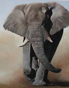 elephant                                                                                                                                                                                 Mais
