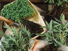 8 hierbas para que tu jardín culinario crezca | eHow en Español
