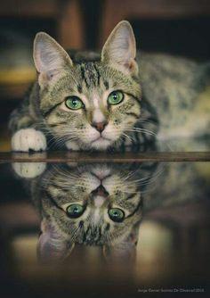 Chat au miroir