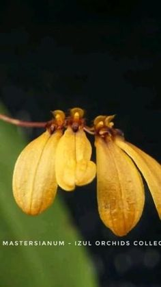 Orchidaceae, Landscaping Company, Great Pictures, Houseplants, Indoor Plants, Orchids, Join, Magic, Group