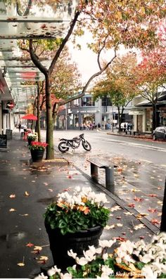 Autumn in Newmarket, Auckland, NZ - I love this image, it sums up the area so well - I lived and worked here for a few years in my early twenties, a beautiful place
