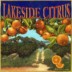 "Lakeside Citrus Label by Sharon Repple Acrylic ~ 20"" x 20"""